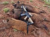 Boar Hunting in Texas Gives a Lifetime Experience