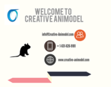 Creative Animodel is a Bioscience CRO