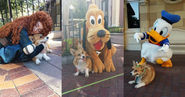 Corgi makes a lot of friends at Disney world, unsurprisingly