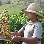Organic And Fair Trade Coffee
