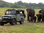 National Park Safaris