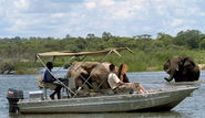 Boat safaris