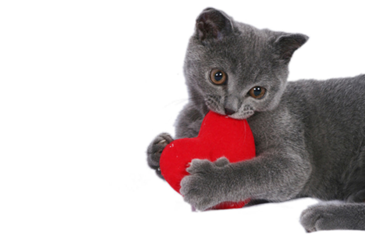 Headline for The Cat's Meow: 10 DIY Valentine Gifts for Your Kitty