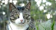 Feral Cat Shelter Options Gallery