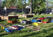 Urban farms continue to grow in Indianapolis - AgriNews