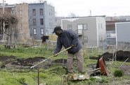 City Gardeners Track the Value of Urban Farming – Next City