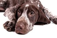 Pet health and runny noses - Pet Insurance Blog - Pets Best Insurance