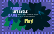 Parrot Life Cycle