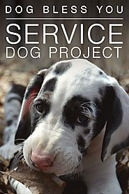 Service Dog Project - great danes | Explore.org