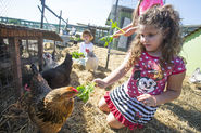 San Jose: Urban farm connects people to each other and the earth