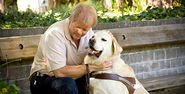 "Dogs - ""Guiding Eyes"" for Visually Impaired Video 