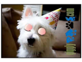 Funny Dog Video Clip Birthday Greetings West Highland Terrier Loves Cake!