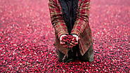 Cranberry Growers Search for Ways to Share Their Bounty
