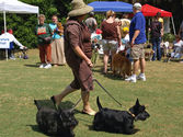 Pet Fest | Charleston County Parks and Recreation