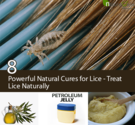 8 Powerful Natural Cures for Lice - Treat Lice Naturally