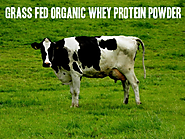 Best Organic Non GMO Whey Protein Powder - Reviews