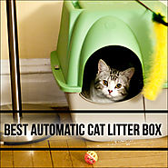 The 10 Best Automatic Cat Litter Boxes Reviews for 2015