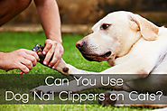 Can You Use Dog Nail Clippers on Cats?