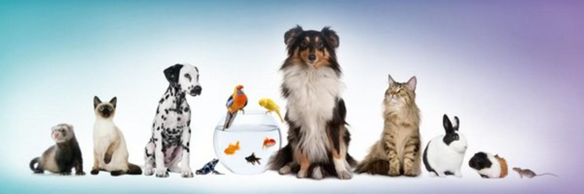 Headline for Best Pet Supplies: Dog Products & Cat Products Reviews