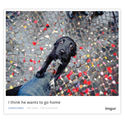 Imgur Now Lets You Embed Images and Albums Anywhere