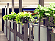 Improve the Natural Look of Office with Indoor Plants Melbourne