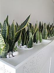 Tips to choose your Indoor Plants Melbourne for indoor planting