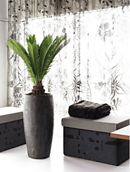 Experience Greenery with Indoor Plants Melbourne