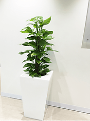 Indoor Plants Melbourne: Indoor plants Melbourne expert services to select the best plants