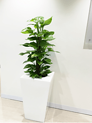 Melbourne Indoor plants professionals made the office a great place