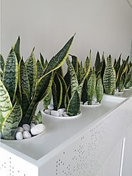 Indoor plant hire Melbourne experts explains how little work can give great benefits with indoor plants
