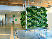 office plant hire melbourne: give your workplace a refreshing touch