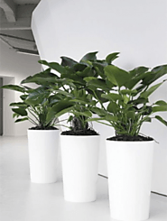 Indoor plants Melbourne: What kind of specialist services and tips you need?