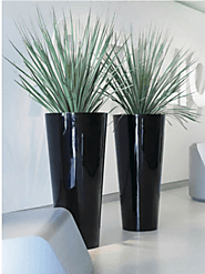 Best Indoor Plants in Melbourne | Inscape Indoor Plant Hire