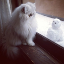 The World's Top 10 Best Pictures of Cats Looking out Windows