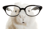 The World's Top 10 Best Images of Animals Wearing Glasses