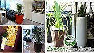Why Plants For Hire in the office is beneficial for the employees? by luwasa