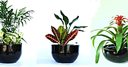 Why you must consider Best Indoor Plants Melbourne for your home