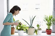5 tips How will you successfully do Indoor Plants Maintenance?