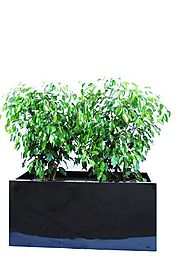 The Importance Of Best Indoor Plants Hire