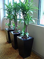 Indoor Plants Hire: How they affect your environment