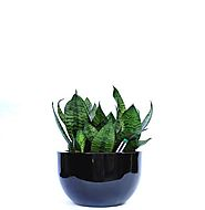 Best Indoor Plant Rental Melbourne