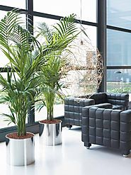 Melbourne Indoor Plants | Luwasa Indoor Plant Hire
