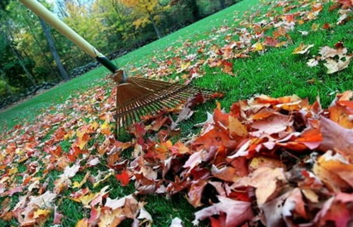 Headline for 5 Ways to Keep Your Yard Clean