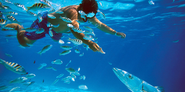 An Introductory Guide to Snorkeling