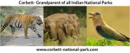 The Top 5 Indian National Parks for Wildlife Photography