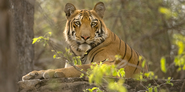 Two New Tiger Reserves in Maharashtra