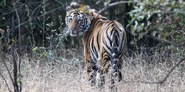 Bandhavgarh National Park - A Date with Wildlife and History