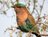 Top Bird Sanctuaries and National Parks around Bangalore