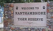 Tiger Number Increases to 85 in Rajasthan