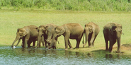 Top 16 Wildlife Sanctuaries and National Parks in Kerala